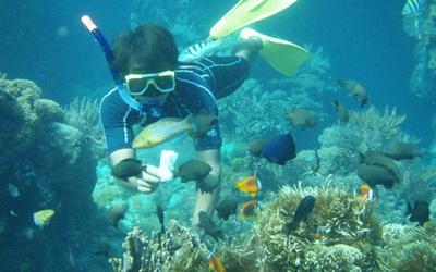 壁纸 海底 海底世界 海洋馆 水族馆 400_250